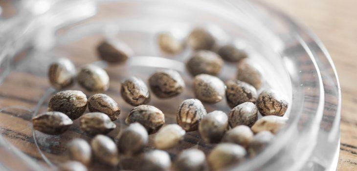hemp-seed-for-sale-glass-top