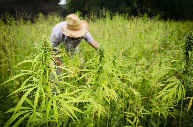 purchasing-bulk-hemp-seed